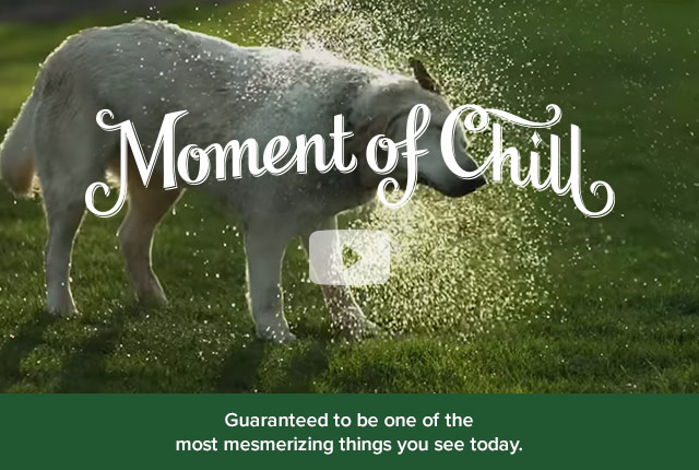 Moment of Chill | Guaranteed to be one of the most mesmerizing things you see today.