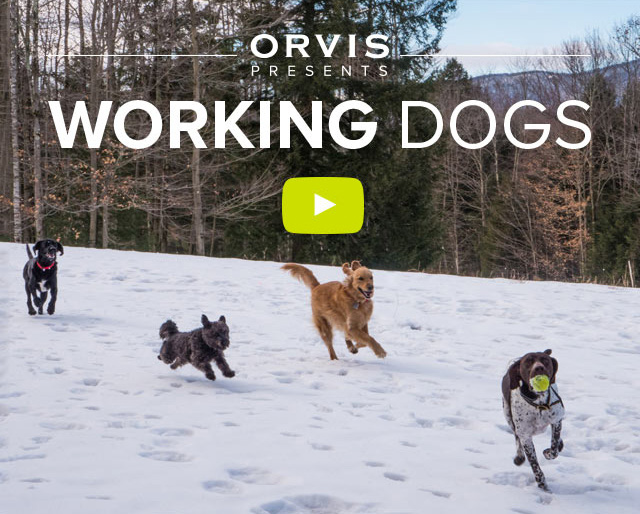 ORVIS PRESENTS  WORKING DOGS