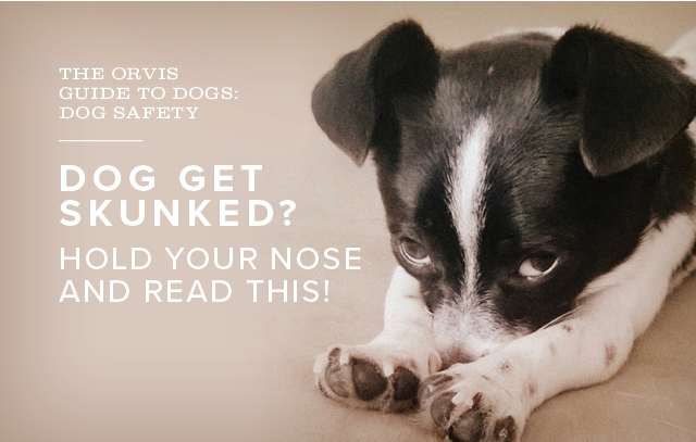 DOG GET SKUNKED? HOLD YOUR NOSE AND READ THIS!